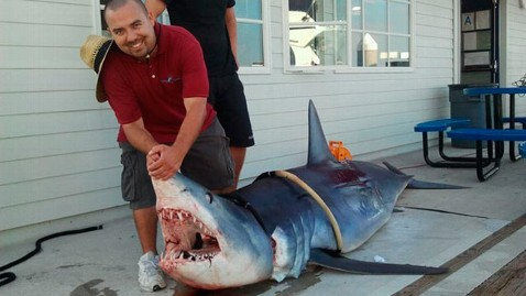 ht shark with man kb 120704 wblog Holiday Hazard: Shark Sightings on Both Coasts