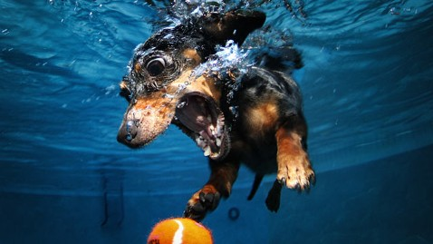 ht underwater dog jp 120216 wblog Photos of Dogs Underwater Become Viral Hit